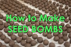 How to Make Seed Bombs For Free