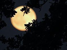 Early Early Morning Moon