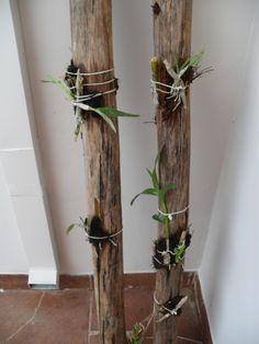 jardins verticais para orquideas - Pesquisa Google
