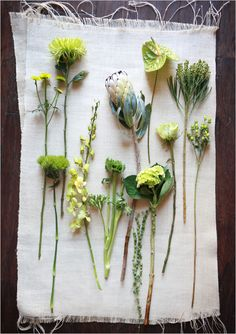 Guide to green flowers...