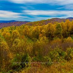 One of the most scenic mountain drives I've ever experienced!!! Shenandoah Valley is definitely a must-visit fall foliage destination in the United States.
