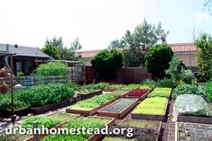 Família produz 3 toneladas de alimentos orgânicos no próprio quintal - Pensamento Verde