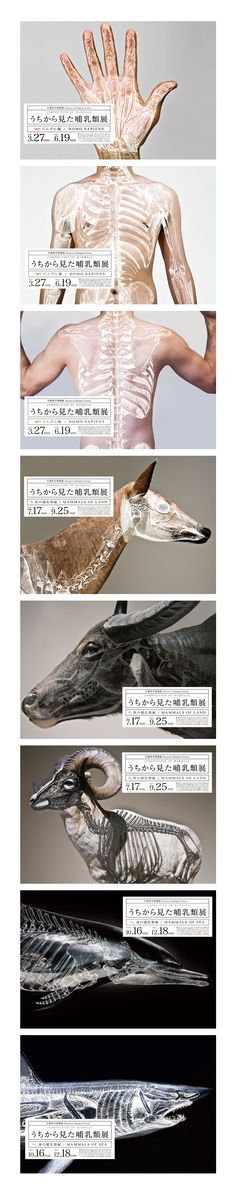 Composition of Mammals「うちから見た哺乳類展」 mock exhibition posters by Wataru Yoshida  Could even do this with graphics of site plans overlaid on photographs of cities. Skeletal look at cities.