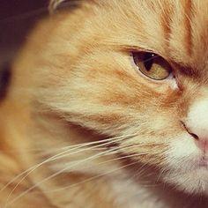 """""""Mi gato Isidoro"""" www.lauralofer.com"""