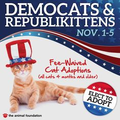 10/31/14: The Animal Foundation waiving adoption fees for cats 4 months and older November 1-5 during Democats and Republikittens special | Animal Foundation
