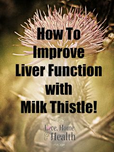 A healthy liver is critical to good health in general. Learn How to Improve Liver Function with Milk Thistle! Milk Thistle taken faithfully can REVERSE many Liver Problems! Liver Detox Drink, Detox Cleanse Drink, Detox Your Liver, Liver Cleanse, Body Cleanse, Fatty Liver Diet, Healthy Liver, Milk Thistle Benefits, Sistema Gastrointestinal