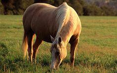 I love you. My horse