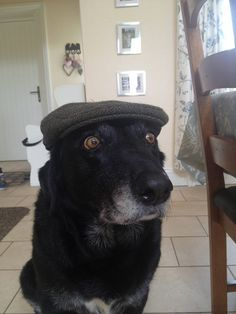 21 Adorable Animals Wearing Hats | Pleated-Jeans.com