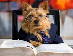 Norwich Terrier,  5x7 fine art photo, humor wall art, home decor, cute dog photo via Etsy