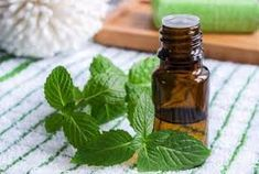Peppermint essential oil has many benefits including digestive support, pain relief and breath freshener. Peppermint oil uses for skin, hair and DIY recipes are included. Sleep Apnea Remedies, Insomnia Remedies, Natural Sleep Remedies, Cold Remedies, Natural Cures, Natural Beauty, Lice Remedies, Snoring Remedies, Peppermint Oil Uses