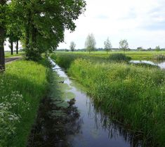 1135 Best The Netherlands images in 2019 | Netherlands