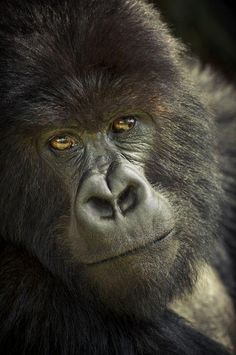 Stare Photo by Stefane Berube — National Geographic Your Shot