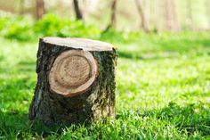 There are many ways through which you can remove the tree stumps all by yourself, and these can also keep your garden clean. But the whole motive of hiring the professional tree stump removal services… Tree Removal Service, Stump Removal, Removal Services, Big Tree, How To Remove, How To Make, Garden Landscaping, Gardening Tips, Make It Yourself