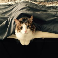 These Adorable Animals work as the Ideal Morning Alarms for their Humans - Viralomia