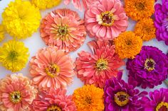 STEMS Floral Design + Productions   Austin Wedding Florist   Bright Summer Centerpiece   Zinnias