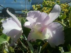 Shade house: Olomana Orchids, O'ahu
