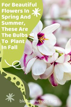 Try planting these bulbs in fall for gorgeous spring flowers after the winter snow has melted. Blessmyweeds.com has tons of fall gardening advice and more. Sign up today to subscribe to the blog and receive our weekly email full of gardening and outdoor living tips. #bulbs #fallgardening #blessmyweedsblog