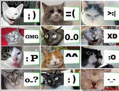Catmotion