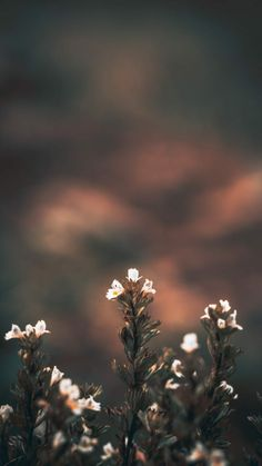 25 Ideas wallpaper white floral iphone for 2019 Landscape Walls, Landscape Wallpaper, Nature Wallpaper, Wallpaper Backgrounds, Iphone Backgrounds, Handy Wallpaper, Landscape Design, Aesthetic Iphone Wallpaper, Aesthetic Wallpapers