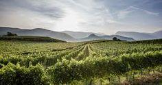 strada del vino alto adige - Cerca con Google
