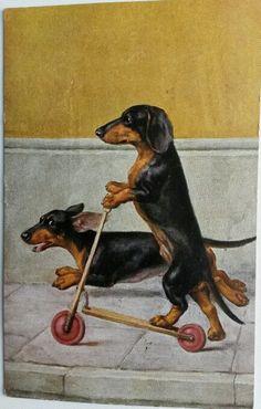 Vintage postcard Dachshund
