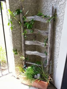 Ladder back chair planter.