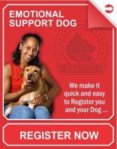 Emotional Support Dog- its a thing!  Along with a note from your doctor, it allows you to bring your dog with you anywhere.  esa register