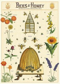 Vintage Bee, Vintage Prints, Vintage Posters, Vintage Style, Vintage Botanical Prints, Vintage School, Antique Prints, Unique Vintage, Honey Wrap