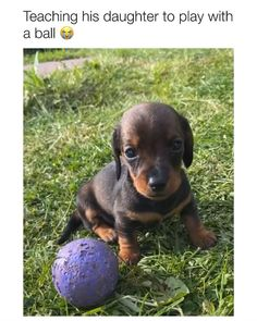 Cute Baby Dogs, Cute Funny Dogs, Cute Dogs And Puppies, Cute Funny Animals, Doggies, Super Cute Animals, Cute Little Animals, Cute Animal Videos, Cute Animal Pictures