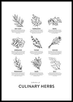 Collection of Herbs, poster