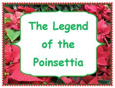 "FREE LANGUAGE ARTS LESSON - ""The Legend of the Poinsettia A Story Comprehension Packet"" - Go to The Best of Teacher Entrepreneurs for this and hundreds of free lessons. Fun Classroom Activities, Holiday Activities, Craft Activities, Classroom Ideas, Kindergarten Themes, Classroom Crafts, Christmas Traditions, Christmas Themes, Christmas Holidays"