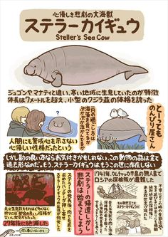 Note: This picture is not up to size of what a Steller's Sea Cow was. For scale, they were the size of about 20 manatees! Nature Animals, Animals And Pets, Cute Animals, Extinct Animals, Prehistoric Animals, Ocean Creatures, Weird Creatures, Steller's Sea Cow, Hedgehog Animal