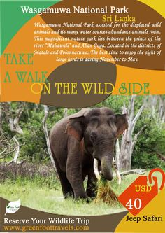 Wasgamuwa National Park Safari. Rates – USD 35 (up to 5 people)  4x4 jeep, Experience Guide, water and snakes. (Not included the Park entrance fees) E-mail:- info@greenfoottravels.com Phone:-  +9471 – 5720880/+9471 - 2776556