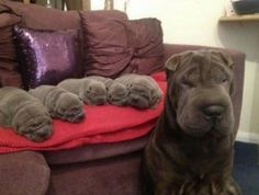 """I, big wrinkle, made all these little wrinkles"""