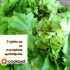 Greek Recipes, Lettuce, Celery, Herbs, Vegetables, Cooking, Clever Tips, Foods, Basel