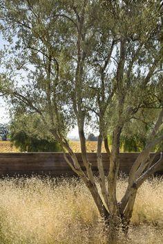 scott-lewis-vineyard-retreat-grasses-northern-california-4-gardenista