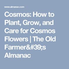 Cosmos: How to Plant, Grow, and Care for Cosmos Flowers   The Old Farmer's Almanac