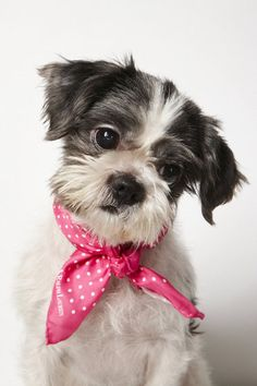 Shelter pup get a new look with a professional photoshoot. (Image credit: Richard Phibbs)