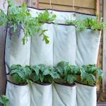10 Nifty Ways To Grow Your Own Herbs