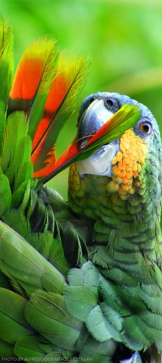 Peru birding