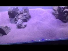 Video blog 3 of Paul Talbot's plant tank adding the easylif