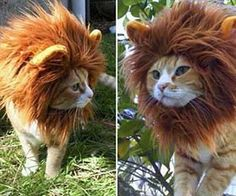 hahahaha! Transform your harmless little feline into a fierce and intimidating king of the jungle with this lion cat hat. As long as you insist on dressing up your cat with things he'll probably despise, make it worth his suffering by choosing the lion cat hat over the clown hat.