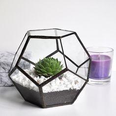 Terrario Dodecaedro - zetaglass.com