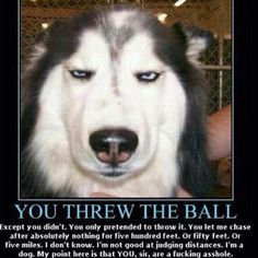 This is exactly what this dog is thinking! ~ksbg