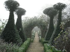 Fantasy-Tim-Burton-like garden - not really for my own desire, but certainly inspiring!