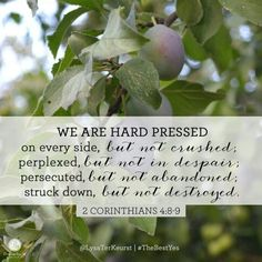 """""""We are hard pressed on every side, but not crushed - perplexed, but not in despair - persecuted, but not abandoned - struck down, but not destroyed."""" 2 Corinthians (NIV) // in today's devotion. Scripture Quotes, Bible Scriptures, Devotional Bible, Scripture Journal, Scripture Cards, Proverbs 31 Ministries Devotions, Adonai Elohim, The Best Yes, Colors"""