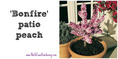 Bonfire Patio Peach, a great choice for narrow patio spaces