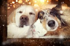 Yes, Dogs Also Have Best Friends! I Want To Show You My Golden Retriever Mali's Friends   Bored Panda