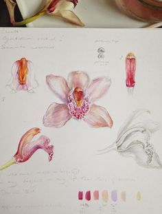 Newest Totally Free Orchid Flower drawing Strategies Do you possess a lovely orchid in the home that you aren't rather sure just how to tend to? Is dependent upon! Botanical Drawings, Botanical Illustration, Botanical Prints, Illustration Art, Watercolor Flowers, Watercolor Paintings, Orchid Drawing, Plant Painting, Art Plastique