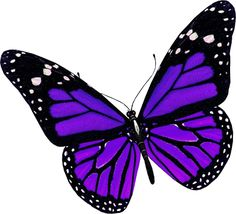 summer_text_butterfly.png (400×363)